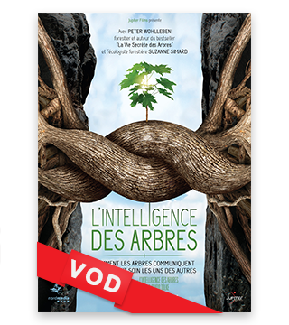 Intelligence des Arbres, L' / Film / HD / 48H / VF + VOST